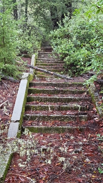 Abandoned stairs where the redwoods meet the chaparral Big Basin Redwoods CA