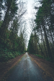 Abandoned stretch of road being reclaimed by nature near the Oregon Coast  OC