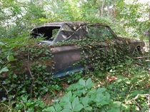 Abandoned Thunderbird in the Woods