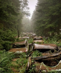 Abandoned traffic jam in a Belgium forest