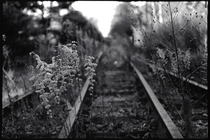 Abandoned Train Tracks in Massachusetts BW mm Film Print