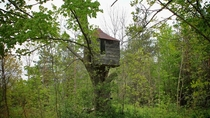 Abandoned Treehouse in the middle of a jungle