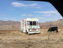 Abandoned truck out in the Rockies Featuring a cow