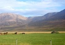 Abandoned turf roof house with horses in Iceland at the intersection of highways  and