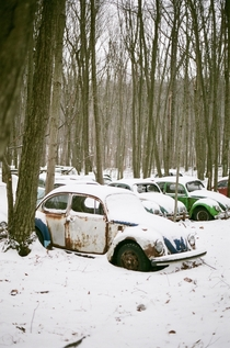 Abandoned VW beetles covered in snow  Fuji Superia