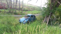 Abandoned VW Bug in WA