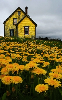 Abandoned Yellow House in Nova Scotia Photo by Matt Madden amp Kim Vallis