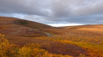 About an hours drive from Nome Alaska - Fall colors in the subarctic tundra  OC