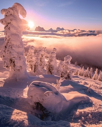 Above cotton candy clouds - Mount Revelstoke Canada instagram guutoby