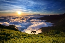 Above the Clouds on Mt Hehuan Taiwan  by Ernie Hsieh