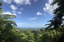 Absolutely beautiful no filters needed Daintree Rainforest Australia