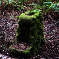Absolutely fascinating and somewhat eerie old public fountain in the Armstrong Redwood forest outside of Guerneville CA