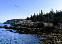 Acadia National Park - Maine USA