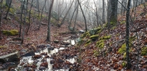 Admittedly this hike wasnt the most pleasant it was cold and rained through the night Paddy Creek Wilderness Missouri
