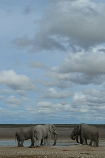 African elephants gather at a watering hole under beautiful skies in Etosha National Park Namibia OC