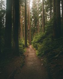 Afternoon walks in Olympic National Park Washington - USA