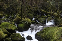 all moss covered everything near Weisendanger Falls OR