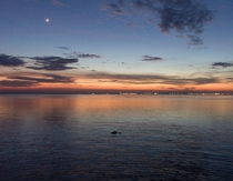 Alligator Surfaces at sunset on Mobile Bay  OC