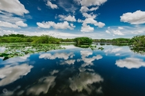 Along the Anhinga Trail in Everglades National Park by Evan Rich