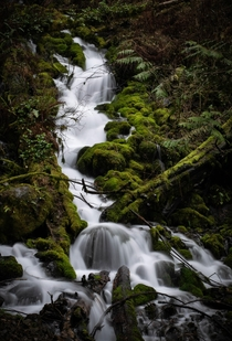 Along the Wahkeena Falls trail Oregon