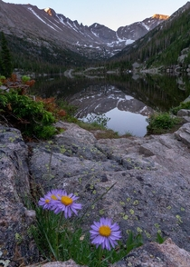 Alpine Daisies at Mills Lake CO USA