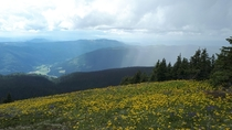 Alpine flowers and a thunderstorm over Sun Peaks BC Canada  x