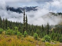 Alpine meadow and montane forest Cirque Rim Olympic NP WA