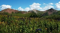 Alpine meadow in Colorado