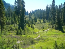 Alpine meadow in the Cascades USA