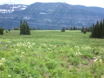 Alpine meadow near Table Rock ID