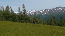 Alpine meadow on Blackerby Ridge a short hike from Juneau Alaska