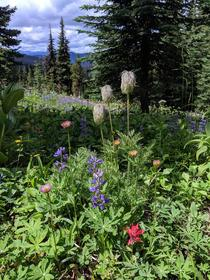 Alpine meadows in Manning Park British Columbia