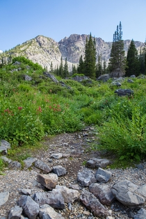 Alta Utah as the wildflowers began to bloom last year This is my happy place any time of the year