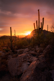 Amazing desert light over the skies of Saguaro National Park Tucson AZ  andrewsantiago_