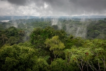 Amazon Rainforest Ecuador Sat atop this -meter observation tower for  hours in the rain to get this shot