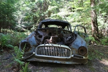 Ambassador Super Club Coupe in a giant redwood forest California