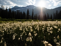 Amidst the wildflowers Monashee Mountains