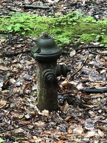 An abandoned fire hydrant in the woods Makes me imagine post-human days when nature will take back over