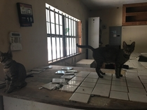 An abandoned gas station inhabited by cats