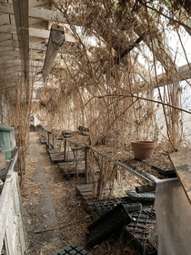 An abandoned greenhouse on the campus of an old sanitarium I was exploring a few weeks back