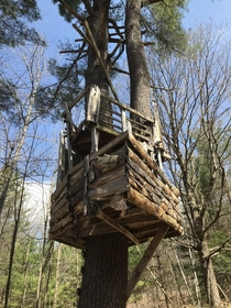 An Abandoned Treehouse I Stumbled Across In My Backyard