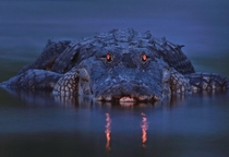 An alligator at dusk