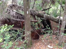 An ancient abandoned truckjeepvehicle of some kind I found while hiking through the swamp on my fathers property in Florida