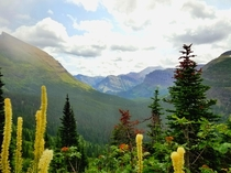 An Army of Evergreens Glacier NP  x