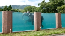 An Asian elephant Elephas maximus swims at its brand new enclosure in Japan