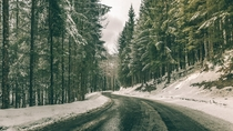 An Austrian Forest Road  Photographed by Paul Gabronis
