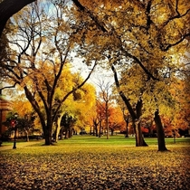 An autumn oasis on an urban campus Taken with an iPhone