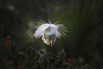 An egret preens itself as it stands on a branch along the River Brahmaputra in Gauhati India