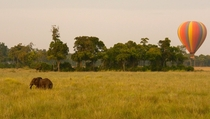An elephant enters the frame as I follow my familys flight across the Kenyan grasslands Masai Mara Kenya