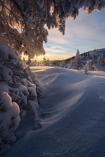 An icy cold but magical sunrise above a white winter wonderland  Buskerud Norway